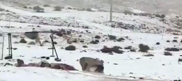 شدید سرد موسم سعودی عرب برفباری