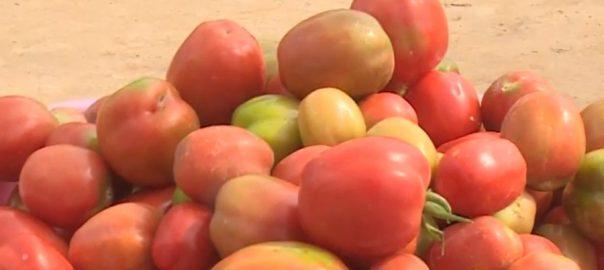 پاکستان نے سارا سال ٹماٹر پیدا کرنیوالا بیج تیار کر لیا