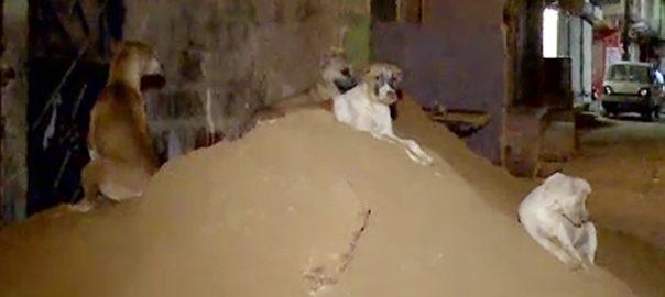 سگ گزیدگی کراچی  92 نیوز آوارہ کتے  سرکاری اسپتال  اینٹی ریبیز ویکسین  مئیر کراچی  وسیم اختر  کتا مار مہم 