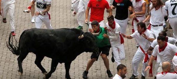 اسپین  بیلوں کی ریس  53افراد زخمی  پامپلونا  92 نیوز
