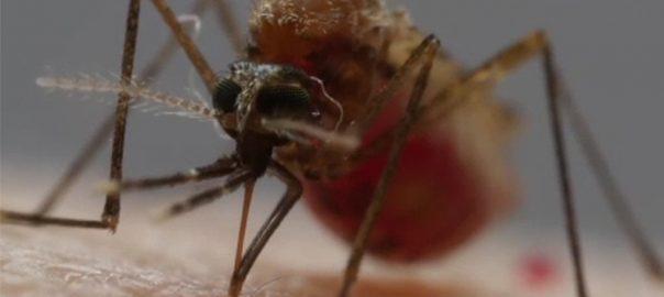 پشاور  ڈینگی وائرس 92 نیوز