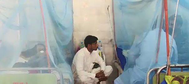 پنجاب خیبرپختونخوا ڈینگی لاہور  92 نیوز