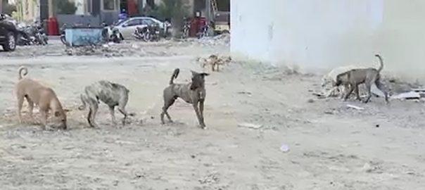 کتے کے کاٹنے کراچی 92 نیوز  جناح اسپتال  بدین  رنگو آسان داس 