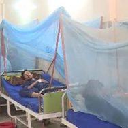 ڈینگی تین جانیں نگل گیا ہلاکتوں کی تعداد  اسلام آباد  92 نیوز