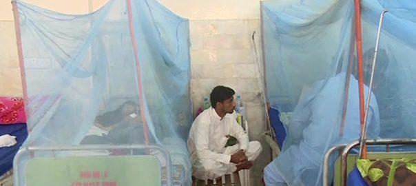 خیبرپختونخوا  ڈینگی  مریضوں کی تعداد  پشاور   92 نیوز