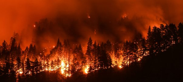 as کیلیفورنیا  92 نیوز جنگلات میں لگی آگ 