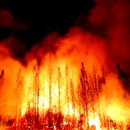 آسٹریلیا ہولناک آگ تباہ کاریاں جاری  سڈنی  92 نیوز جنگلی حیات  کوئنزلینڈ  نیوساؤتھ ویلز