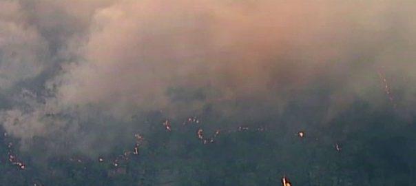 آسٹریلیا ، جنگلات ، جھاڑیوں ، آگ ، بے قابو، زہریلے