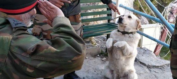 بھارتی جنرل  کتے کو سلیوٹ  تصویر وائرل  نئی دہلی  ویب ڈیسک 