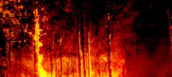 آسٹریلیا جنگلات تین افراد ہلاک  کینبرا  92 نیوز بنی نوع 