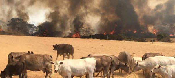 آسٹریلوی جنگلات، آگ بے قابو، سابق وزیراعظم، شعلوں، بجھانے، مشن میں شامل، نیوساؤتھ ویلز، 92 نیوز