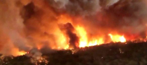 آسٹریلیا  جنگلات  آگ  کینبرا  92 نیوز