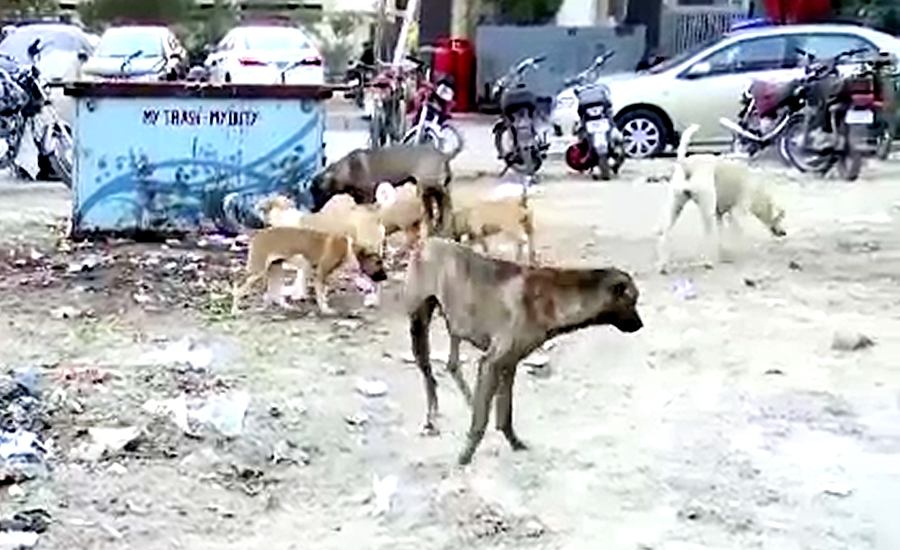 آوارہ کتوں نے ایک ہی دن میں چار درجن افراد کو زخمی کردیا