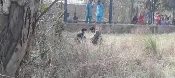 لاہور، سفاری پارک ، شیروں ، حملے ، 17 سالہ نوجوان ، جاں بحق