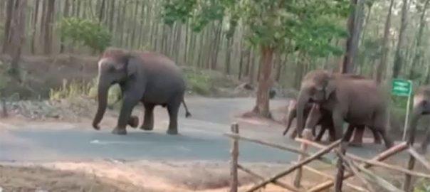 بھارت ، ہاتھی ، کورونا لاک ڈاؤن ، خالی، سڑکوں