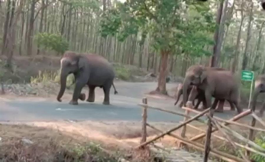 بھارت میں ہاتھی کورونا لاک ڈاؤن کے باعث خالی ہونے والی سڑکوں پر نکل آئے