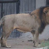 نائنٹی ٹو نیوز ، بچوں ، جانوروں ، ملوانے ، چڑیا گھر پہنچ گیا ، لاہور ، 92 نیوز