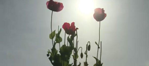 ملک بھر ، گرمی ، جوبن دکھانے لگی ، لاہور ، 92 نیوز