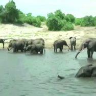 افریقی ملک ، بوٹسوانا ، ہاتھیوں ، پُراسرار ، ہلاکت