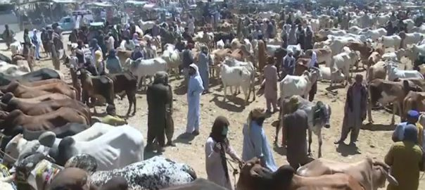عیدالاضحیٰ ، لاہور ، 14 مقامات ، مویشی منڈیاں ، فیصلہ ، 92 نیوز