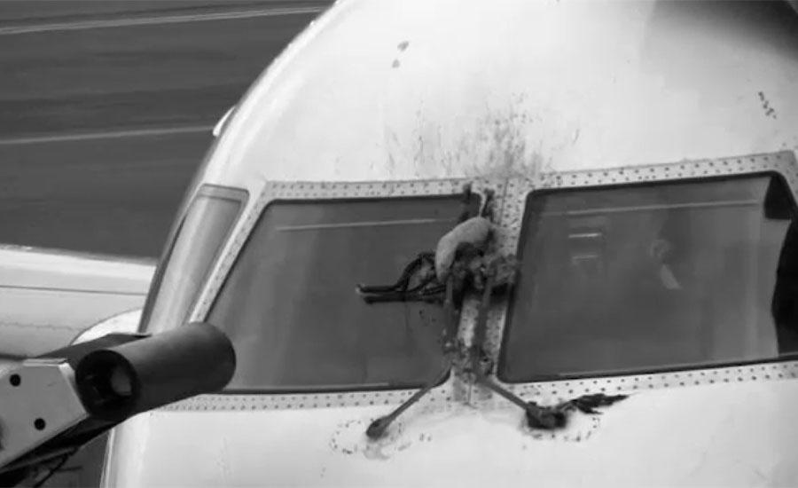 ایئرپورٹس پر طیاروں سے پرندے ٹکرانے کے واقعات میں اضافہ