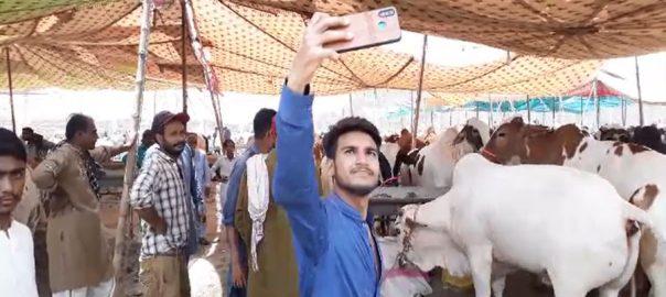حیدر آباد ، عید قرباں ، مویشی منڈی قائم ، 92 نیوز