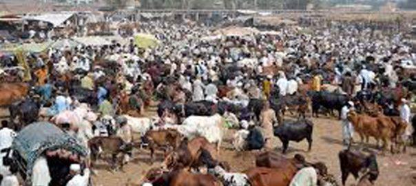 شہر اقتدار ، عید قرباں ، مویشی منڈیوں ، ایس او پیز ، عملدرآمد نہ ہوسکا ، اسلام آباد ، 92 نیوز