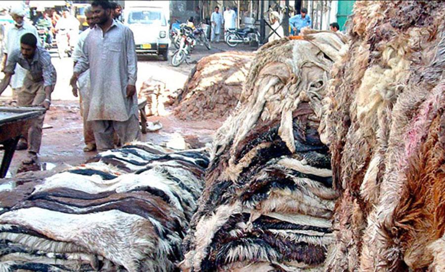 سندھ حکومت کی بغیر اجازت جانوروں کے کھالیں جمع کرنے پر پابندی