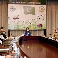 وزیراعظم ، ٹڈی دل کے خاتمے ، ایکشن پلان فیز 2 ، منظوری ، اسلام آباد ، 92 نیوز