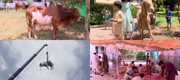 ملک بھر ، عید کے دوسرے روز ، سنت ابراہیمی کی ادائیگی ، سلسلہ جاری ، لاہور ، 92 نیوز