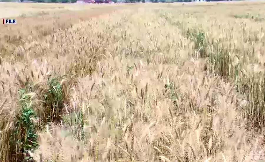 گندم بحران سے بچنے کیلئے محکمہ صحت کے افسران نے سر جوڑ لئے
