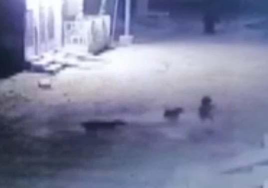 ملیر میں آوارہ کتوں نے معصوم بچے کو نوچ نوچ کر شدید زخمی کر دیا